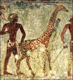 Eski Mısır, zürafa, maymun